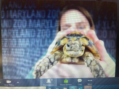 Maryland Zoo Virtual Visits & Animal Encounters
